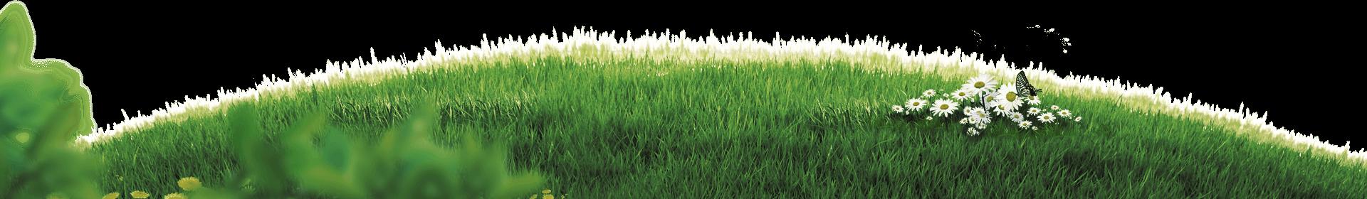 motion-grass